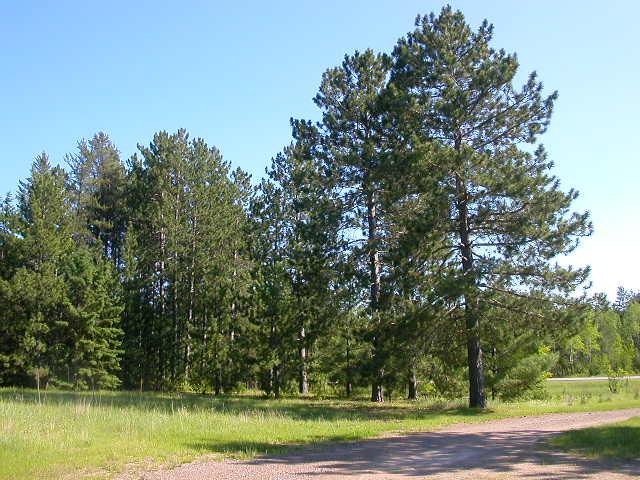 TreesDown 002