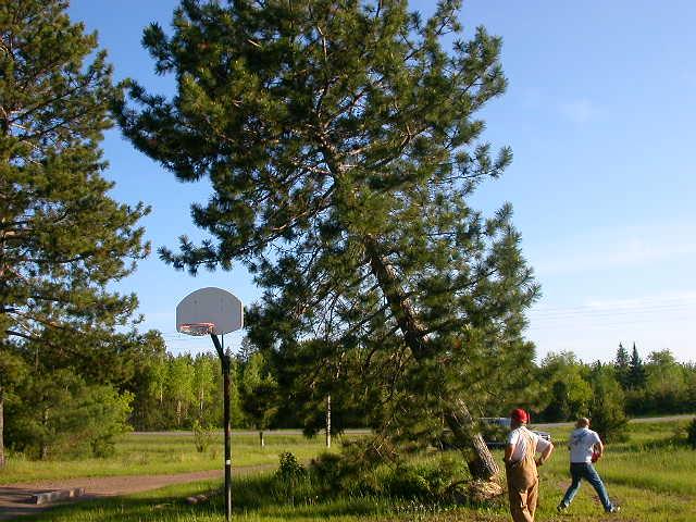 TreesDown 010