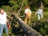 TreesDown 013